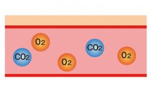 炭酸と肌説明1