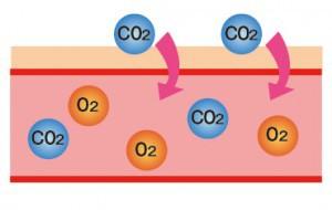 炭酸と肌説明2