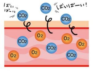 炭酸と肌説明5